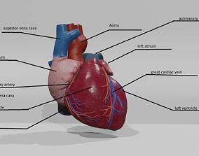 game-ready Heart Educational 3d model