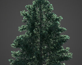 2021 PBR Engelmann Spruce - Picea Engelmanni 3D model 1