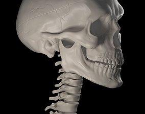 3D printable model cranium Human Skull