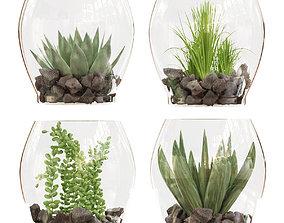 3D Collection plant vol 71