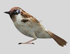 3D model Sparrow Bird Modal