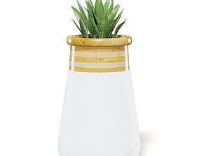 white Plant 3D Model in Large Modern Pot