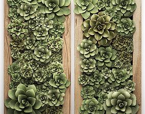 Echeveria Vertical garden 52 3D
