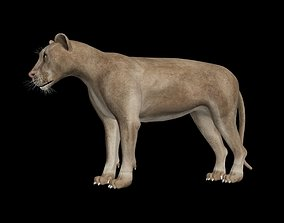 rigged low-poly CGI Lion Rigged 3DSMax