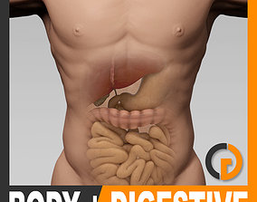 Human Male Body and Digestive System - Anatomy 3D