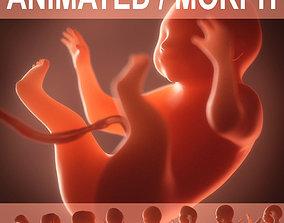 Human embryo fetus Growth animation 3D model
