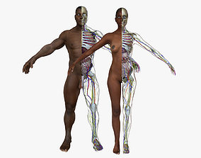 3D Full Body African American Anatomy Collection