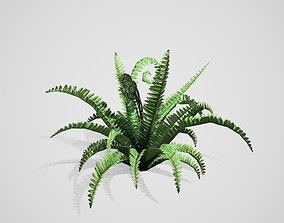 3D asset Boston Fern bush