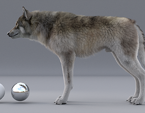 WOLF 3d model RIGGED FUR animated low-poly