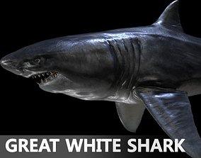 3D fish Great white Shark