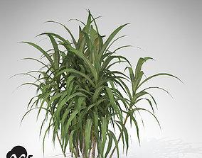 XfrogPlants Sugar Cane 3D model