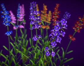 Flower Lavandula 3D asset
