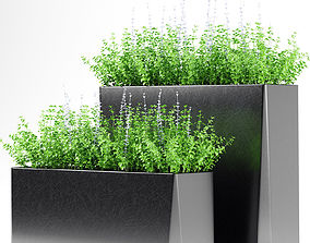 PLANTS 180 3D model
