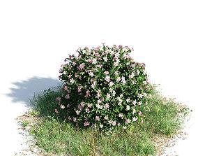 Nerium oleander dwarf 43 am154 3D