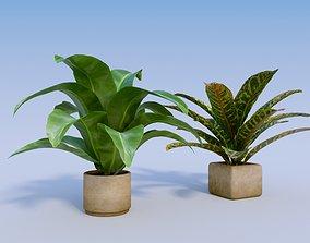 3D model Banana and Croton