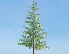 Tall Thin Tree 3D model