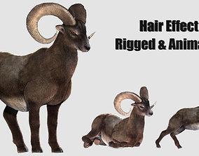 rigged goat ram sheep 3D model