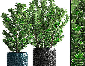 Euonymus plant in pot 3D model