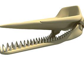 3D model Sperm Whale Skull
