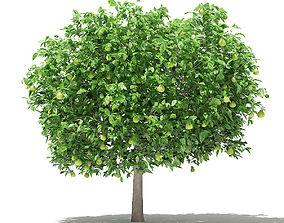 Pomelo Tree with Fruits 3D foliage