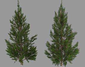 Christmas Tree tree pine 3D model