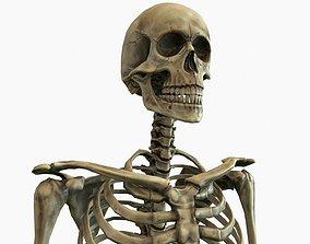 Anatomical Human Skeleton 3D model