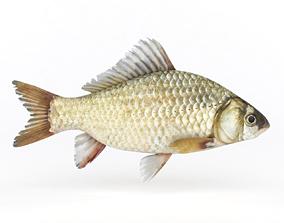 3D model Fish Crucian Carp