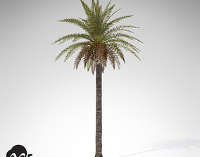 3D XfrogPlants Canary Date Palm