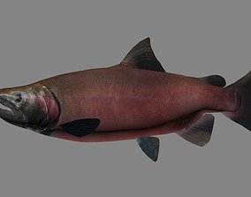 Coho Salmon 3D model