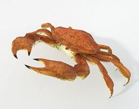 Crab crustaceans 3D model