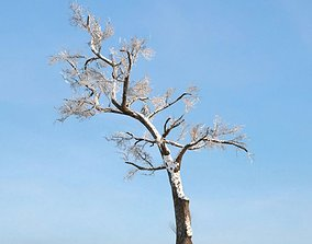 Bare Winter Tree With Snow 3D
