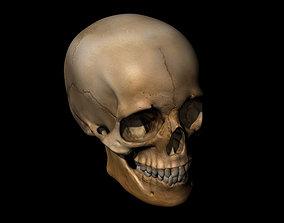 3D Skull print model