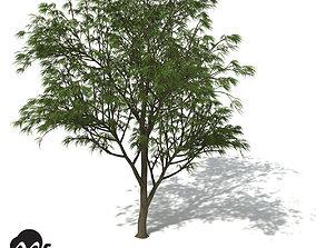 3D XfrogPlants Horsetail Casuarina