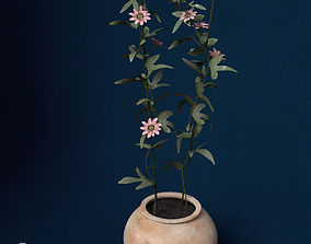 XfrogPlants Passion Flower 3D model
