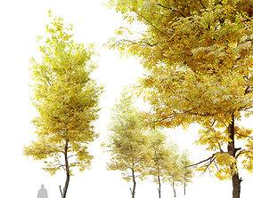 3D Autumn Fraxinus ornus