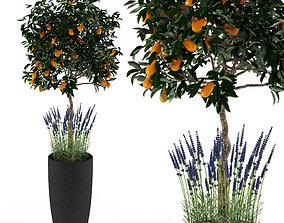 3D Kumquat and lavender