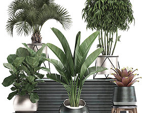 Decorative plants in flower pots for the interior 463 3D