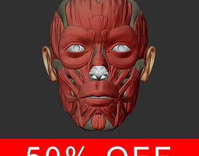 3D model Head anatomy muscles