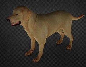 3D asset Dog Realistic