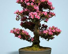 Satsuki Bonsai Tree Blossom 2 3D model