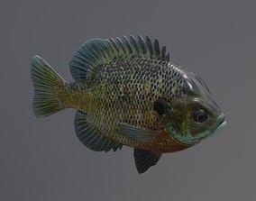 3D asset Bluegill Fish