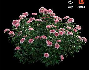 bush Rose plant set 27 3D model