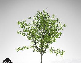 3D XfrogPlants European Buckthorn
