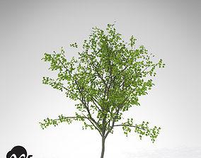 3D model XfrogPlants European Buckthorn