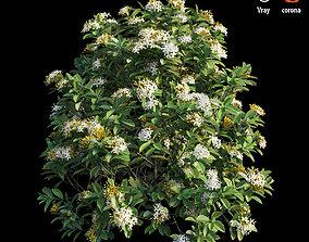 Ixora plant set 32 3D model