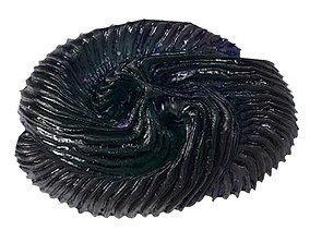 3D asset Tribrachidium Fossil animal