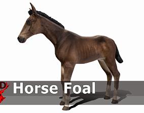 Horse Foal 3D asset
