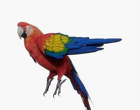 Red Macaw Parrot Rigged 3D