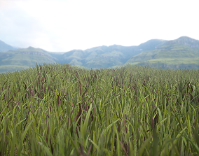 Unity Grass Collection v1 3D asset