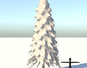 conifer 3D model Snow Abies Fraseri Tree